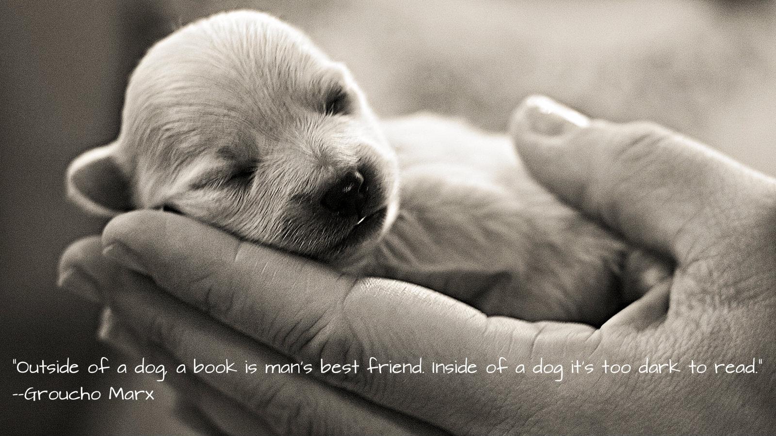 When A Dog Dies Quotes Quotesgram: New Puppy Quotes. QuotesGram