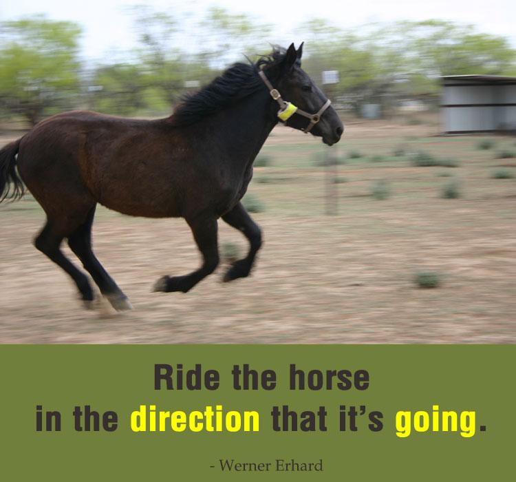 Encouraging Horse Quotes Quotesgram