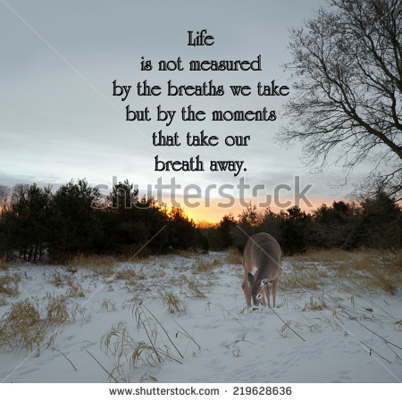inspirational quotes about pigs quotesgram