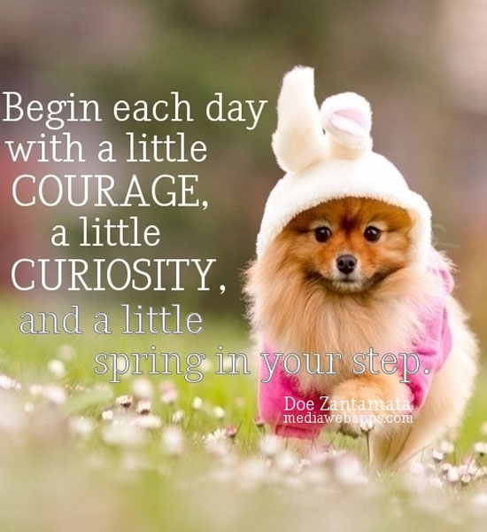 Inspirational Spring Quotes And Sayings: Spring Funny Animal Quotes. QuotesGram