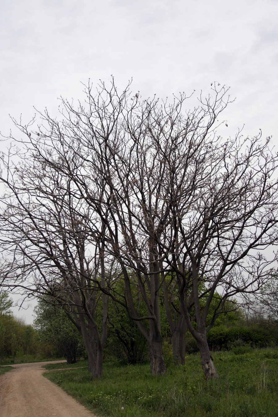 Which Trees Are Used To Make Paper: Quotes About Bare Trees. QuotesGram