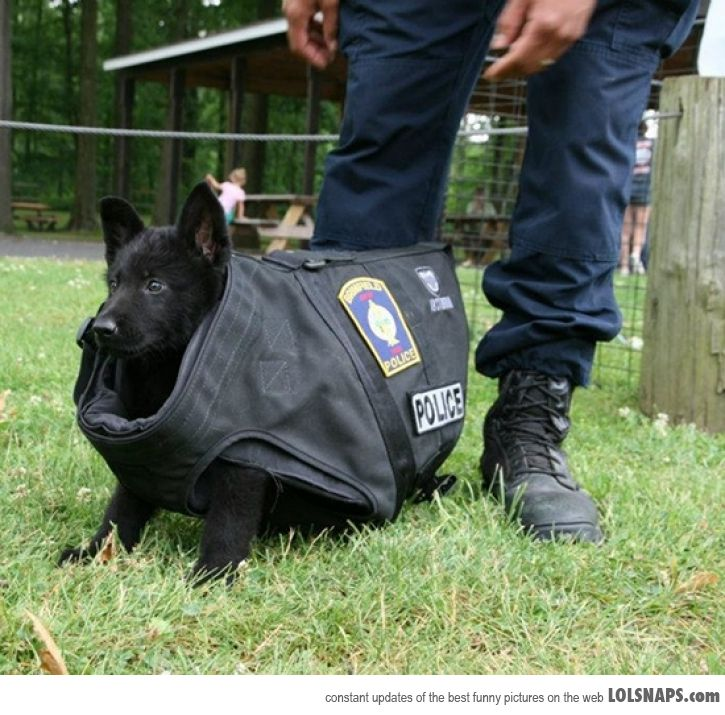 Police K9 Funny Quotes Quotesgram
