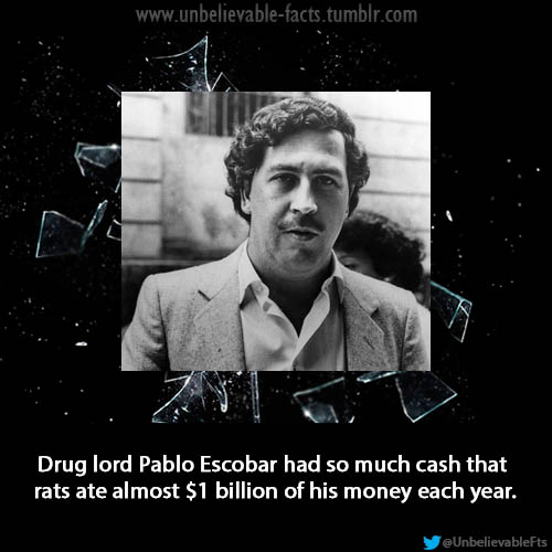 pablo escobar sayings - photo #19