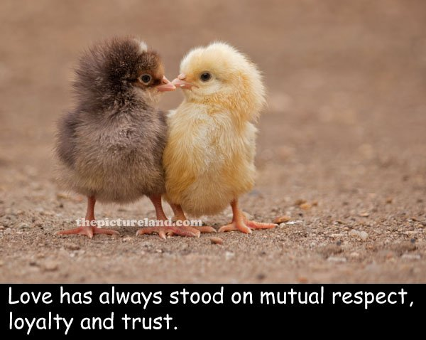 Chickens Good Quotes: Quotes About Baby Chicks. QuotesGram