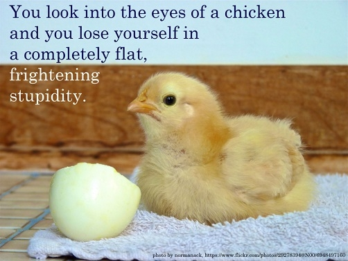 Chickens Quotes Quotesgram: Quotes And Sayings About Chickens. QuotesGram