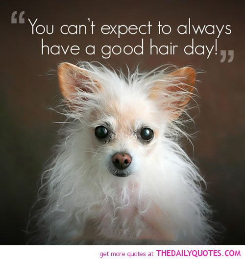 Funny Friendship Day Quotes: Good Hair Day Quotes. QuotesGram