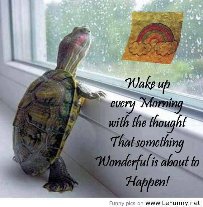 Turtle Love Quotes. QuotesGram  Turtle Love Sayings