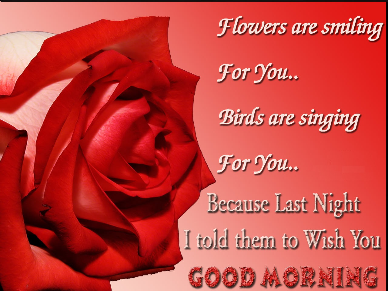 Good Morning Quotes For Him Quotesgram: Good Morning Quotes With Roses. QuotesGram