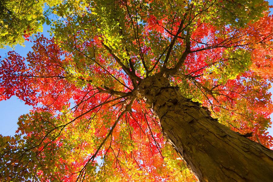 Risultati immagini per tree in autumn