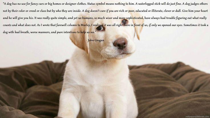 When A Dog Dies Quotes Quotesgram: John Grogan Quotes. QuotesGram