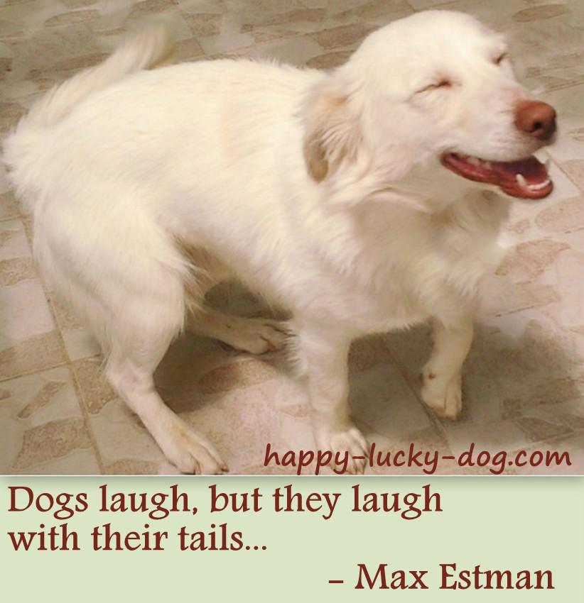 smile dog quotes quotesgram