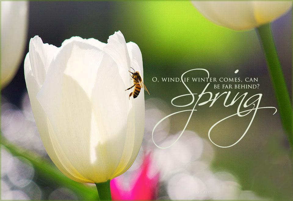 spring blossom quotes  quotesgram