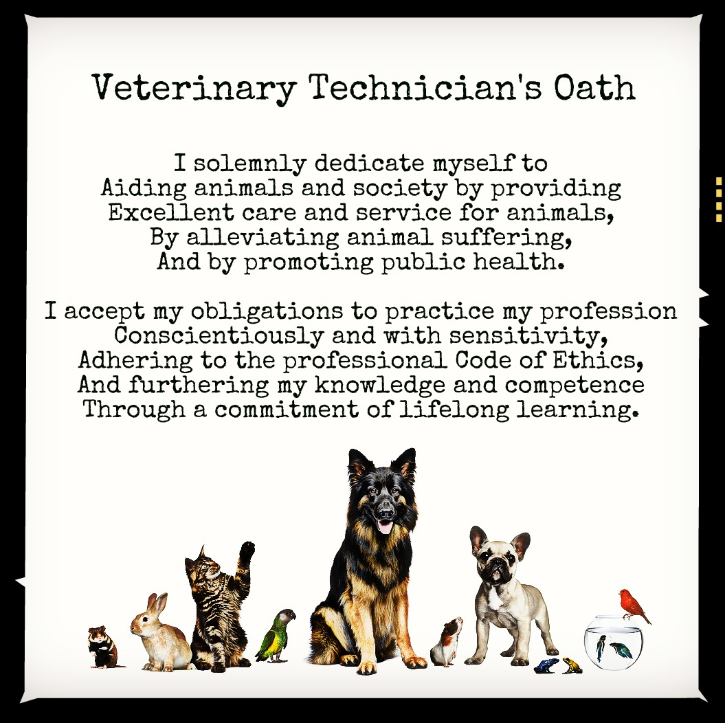 Funny Vet Tech Quotes. QuotesGram