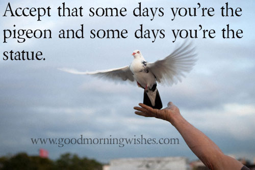 Pictures And Inspiration: Pigeon Statue Images Quotes. QuotesGram