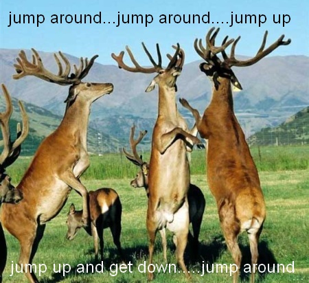 Deer Jumping Quotes Quotesgram