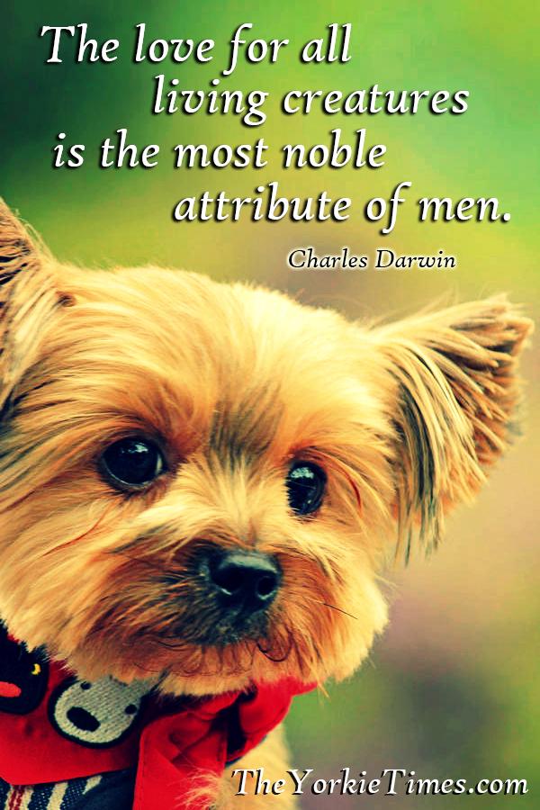 Dog Training Funny Quotes. QuotesGram