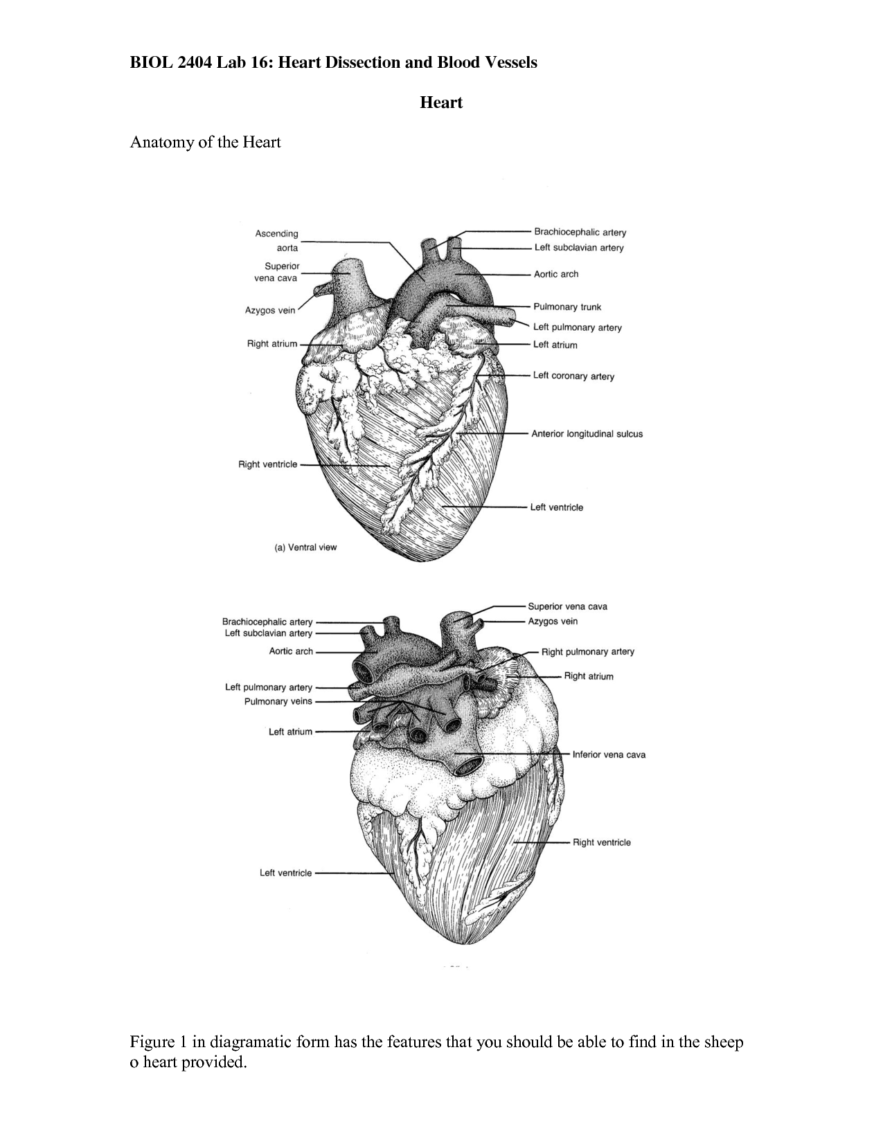 worksheet Sheep Heart Dissection Worksheet dissected quotes quotesgram follow us