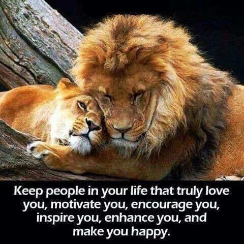 Lion Quotes And Sayings Leo The Lion Pride Quo...