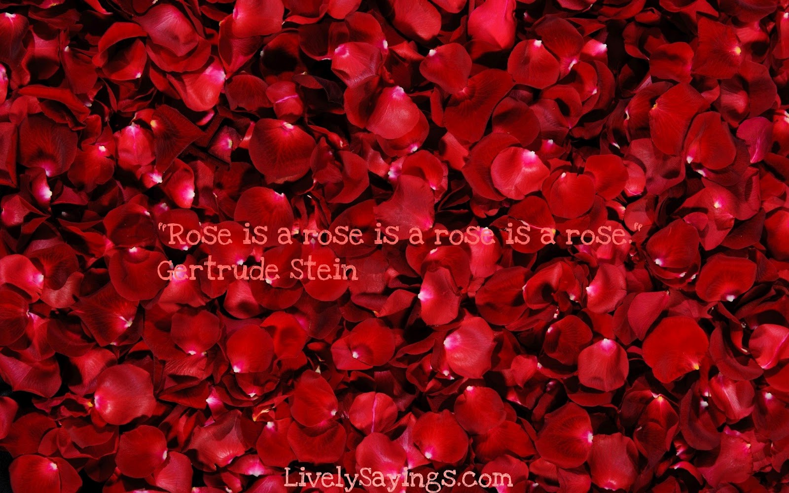 Roses With Quotes In Spanish Quotesgram