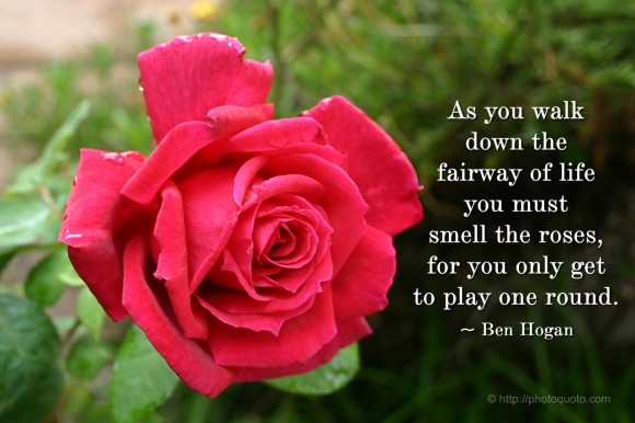 Rose Quotes And Sayings. QuotesGram