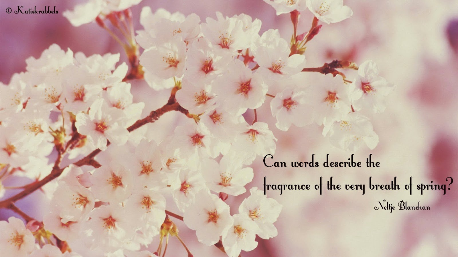 Hello Spring Quotes And Sayings Quotesgram