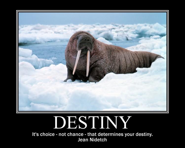 Inspirational Quotes About Destiny Quotesgram
