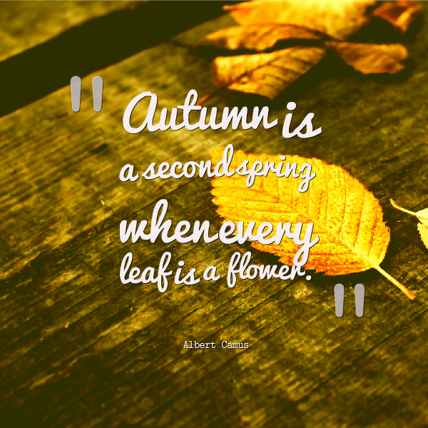 Quotes About Autumn Or Fall. QuotesGram