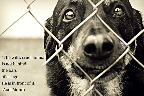 animal abandonment essay