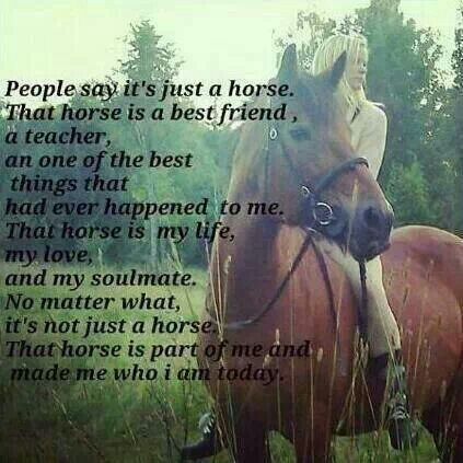 My Horses Are Life Quotes. QuotesGram