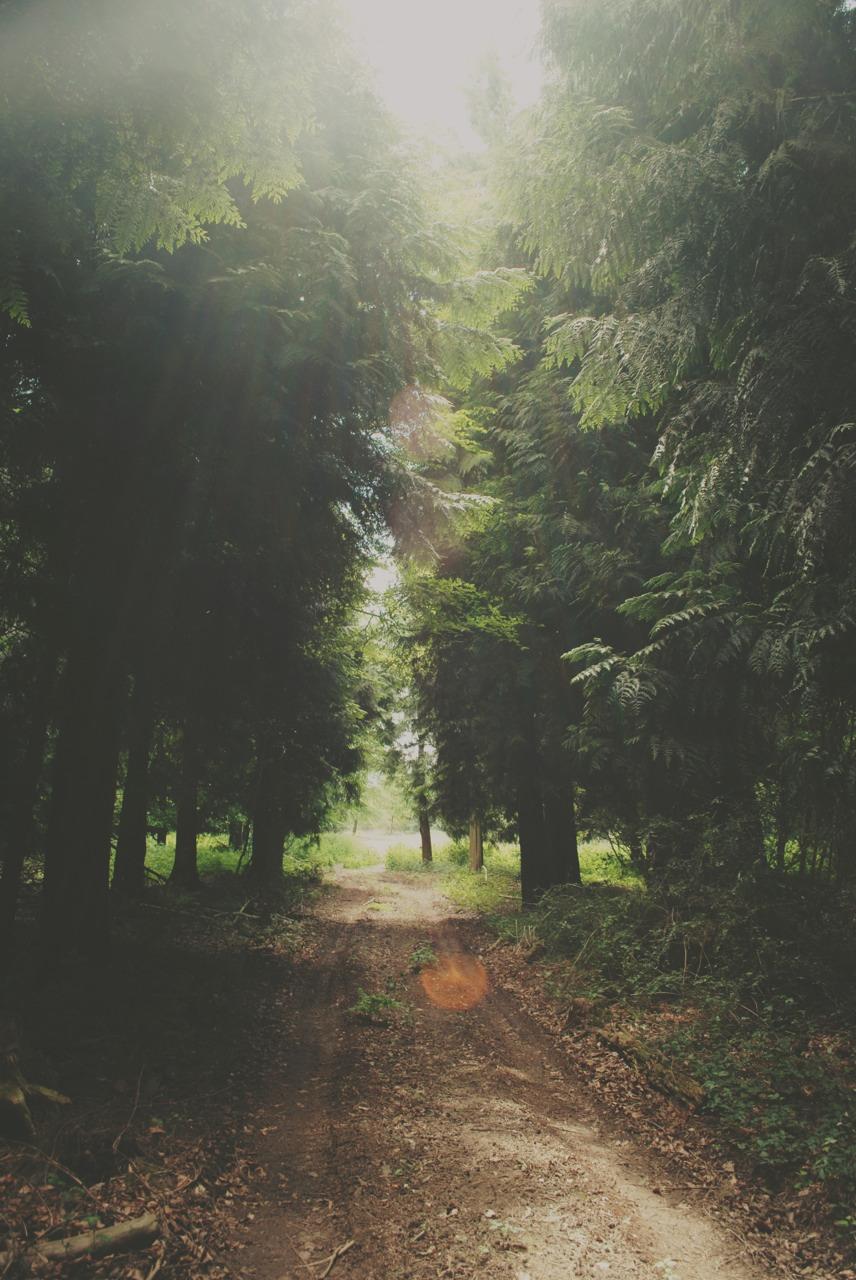 Forest Nature Quotes Quotesgram