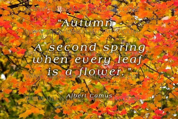 Autumn Bible Quotes. QuotesGram
