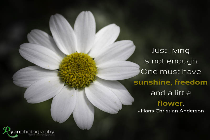 Sunshine and flowers quotes quotesgram - Flowers that mean freedom ...