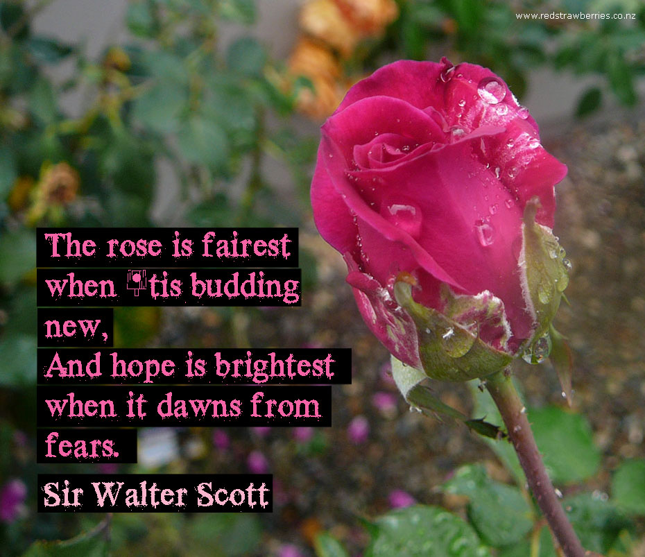 Funny Quotes About Roses. QuotesGram