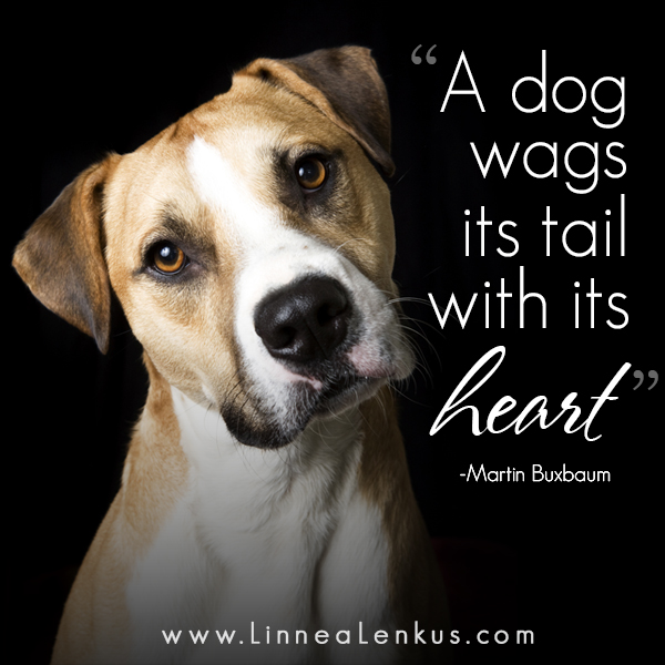 Wags Dog Rescue