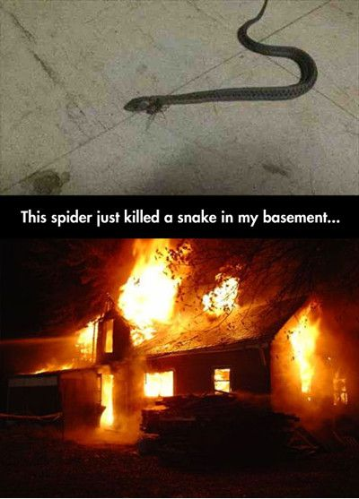 Funny Quotes About Killing Spiders Quotesgram