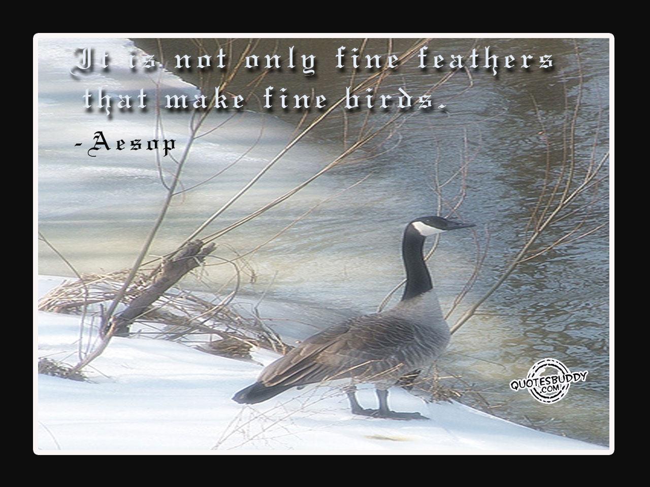 Phoenix Bird Quotes. QuotesGram