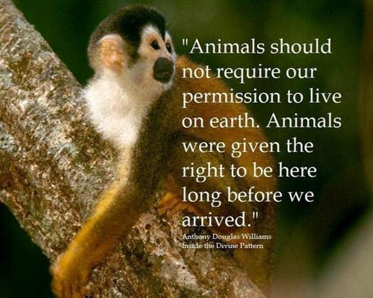 Animal Rights Quotes And Slogans. QuotesGram
