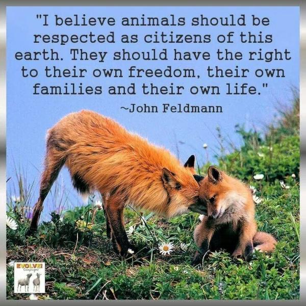 Crazy Animals Motivational Quotes. QuotesGram