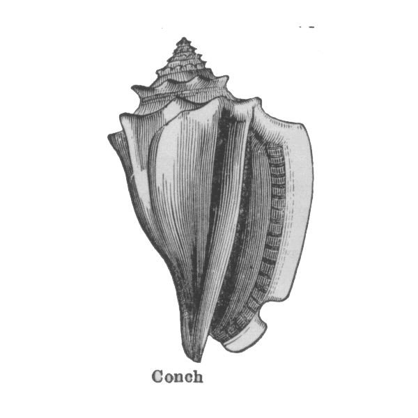 the representation of power and order through the conch in goldings lord of the flies Lord of the flies chapter 1-6 study  he tries to keep the boys focused on domestic order and the rules of civilization piggy  the representation of abstract.