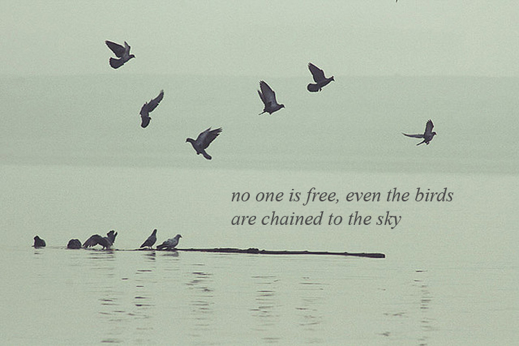 Quotes About Love And Birds Quotesgram