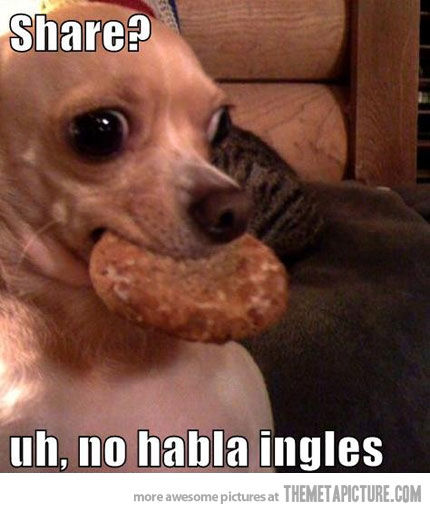 Silly Quotes Pics: Cute Chihuahua Quotes. QuotesGram