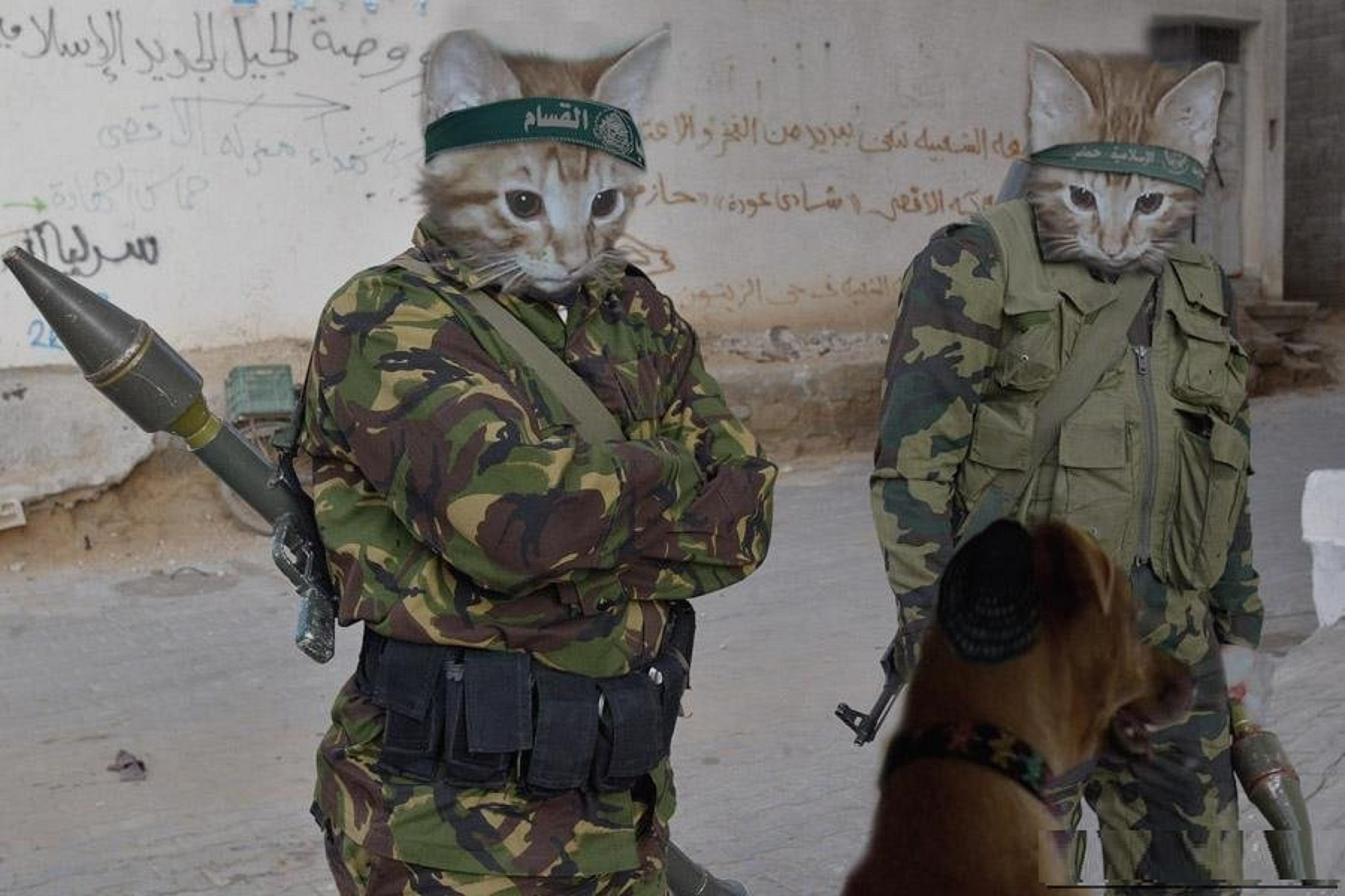 Дорогая, картинки прикол армия коты