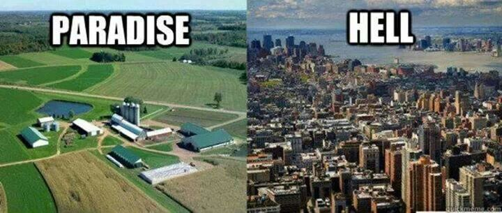 Similarities of City Life & Farm Life