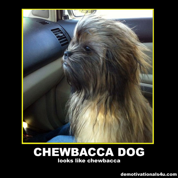 Husband May The 4th Be With You: Funny Quotes About Chewbacca. QuotesGram