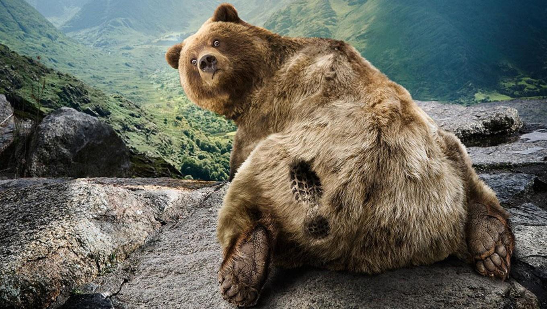 FUNNY VIDEO OF BLACK BEAR IN HAMMOCK - YouTube |Funny Black Bear Family
