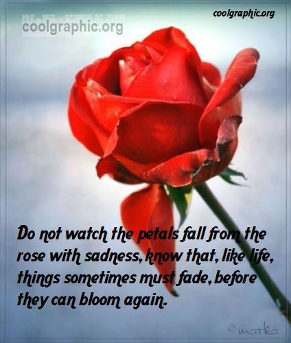Rose Petal Quotes. QuotesGram