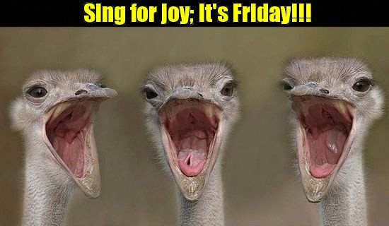 Happy friday funny animal pictures