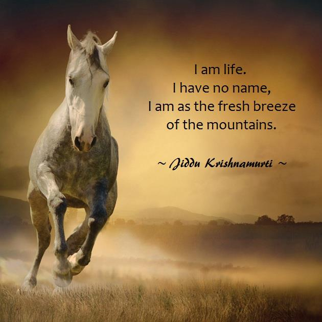 J Loved The Field On The Wall Look ȁ�: Live Horse Quotes. QuotesGram