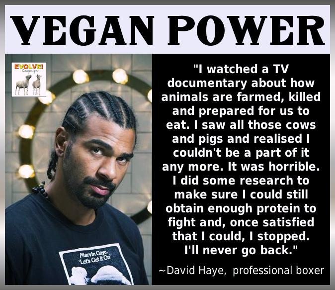 10 Arguments Against A Vegan Lifestyle