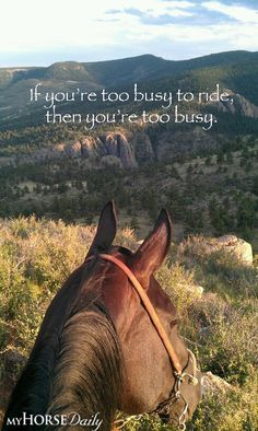 Horse And Owner Quotes. QuotesGram